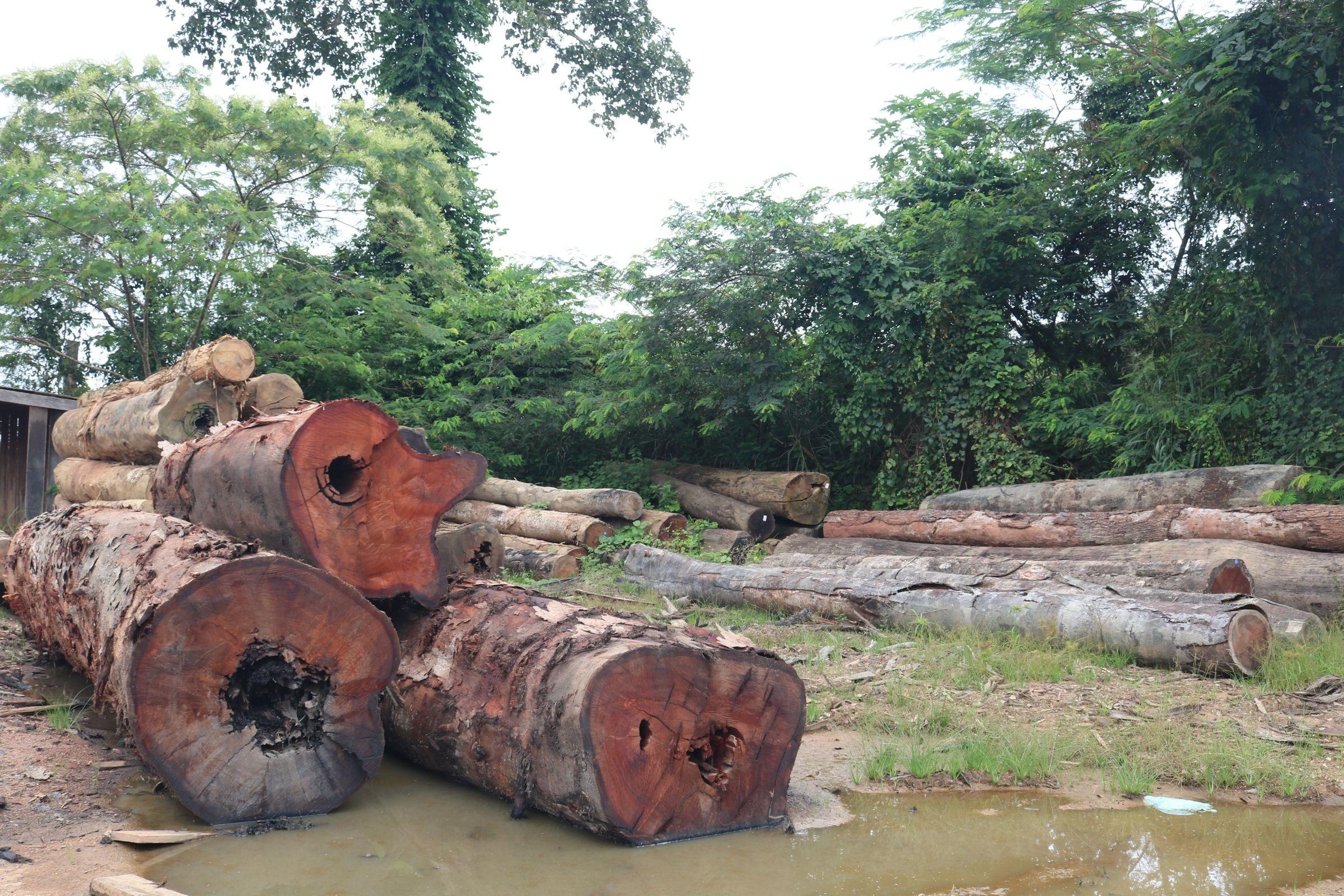 Desmatamento no Amazonas aumenta 71% em setembro